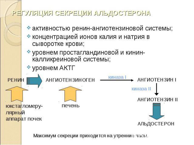 активностью ренин-ангиотензиновой системы; активностью ренин-ангиотензиновой системы; концентрацией ионов калия и натрия в сыворотке крови; уровнем простагландиновой и кинин-калликреиновой системы; уровнем АКТГ