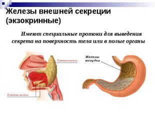 Железы внешней секреции (экзокринные) Имеют специальные протоки для выведения се