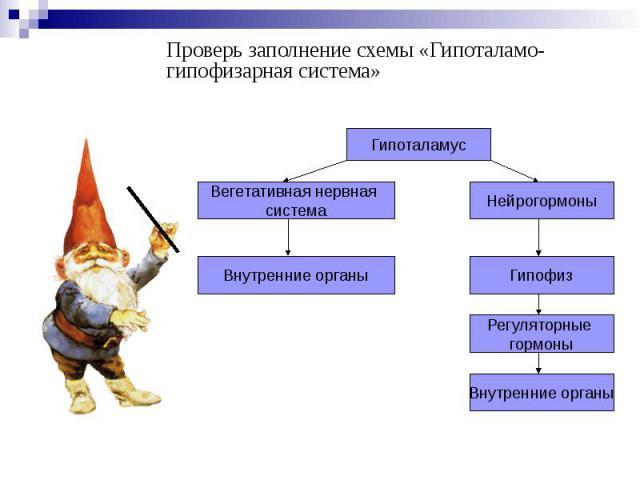 Проверь заполнение схемы «Гипоталамо-гипофизарная система» Проверь заполнение схемы «Гипоталамо-гипофизарная система»