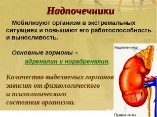 Мобилизуют организм в экстремальных ситуациях и повышают его работоспособность и