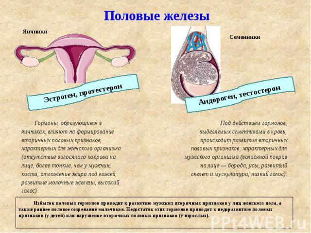Щитовидная железа женские половые гормоны