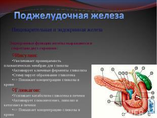 Пищеварительная и эндокринная железа Пищеварительная и эндокринная железа