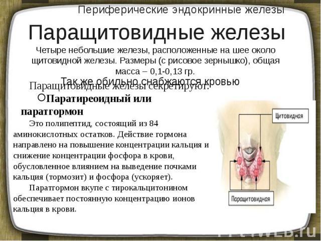 Периферические эндокринные железы Четыре небольшие железы, расположенные на шее около щитовидной железы. Размеры (с рисовое зернышко), общая масса – 0,1-0,13 гр.