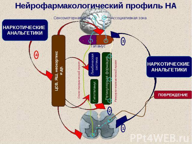 Нейрофармакологический профиль НА