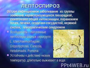 ЛЕПТОСПИРОЗ Острое инфекционное заболевание из группы зоонозов, характеризующеес