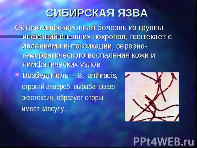 СИБИРСКАЯ ЯЗВА Острая инфекционная болезнь из группы инфекций внешних покровов, протекает с явлениями интоксикации, серозно-геморрагического воспаления кожи и лимфатических узлов Возбудитель – B. аnthracis, строгий анаэроб, вырабатывает экзотоксин, …