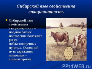 Сибирской язве свойственна стационарность – неоднократное повторение болезни в р
