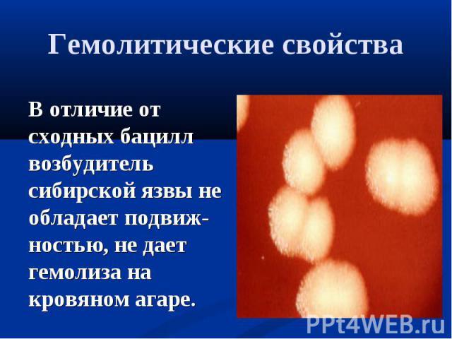 В отличие от сходных бацилл возбудитель сибирской язвы не обладает подвиж-ностью, не дает гемолиза на кровяном агаре. В отличие от сходных бацилл возбудитель сибирской язвы не обладает подвиж-ностью, не дает гемолиза на кровяном агаре.