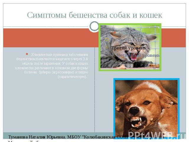 Симптомы бешенства собак и кошек