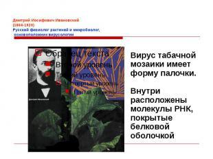 Дмитрий Иосифович Ивановский (1864-1920) Русский физиолог растений и микробиолог