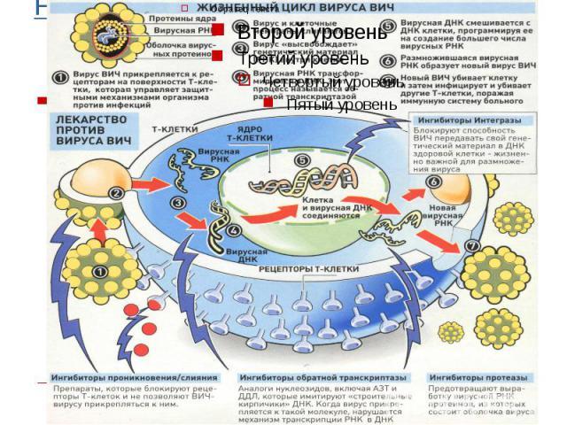 F:\СПИД\Цикл вируса ВИЧ.jpg