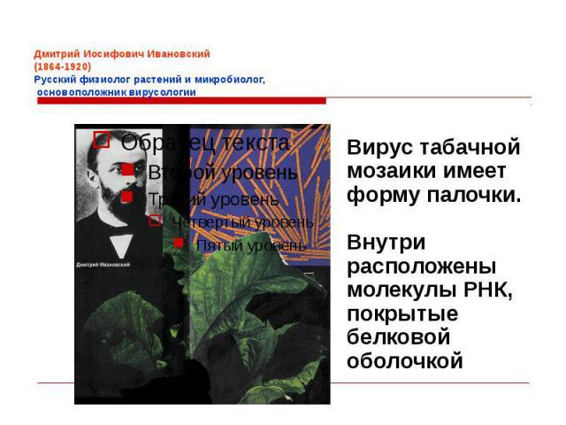 Дмитрий Иосифович Ивановский (1864-1920) Русский физиолог растений и микробиолог, основоположник вирусологии