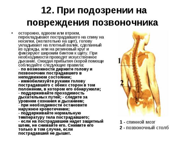 осторожно, вдвоем или втроем, перекладывают пострадавшего на спину на носилки, (желательно на щит), голову укладывают на плотный валик, сделанный из одежды, или на резиновый круг и фиксируют широким бинтом к щиту. При необходимости проводят искусств…
