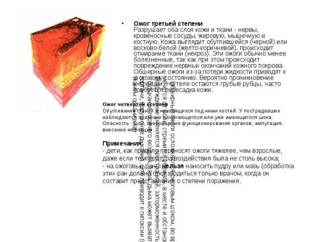 Ожог третьей степени Разрушает оба слоя кожи и ткани - нервы, кровеносные сосуды, жировую, мышечную и костную. Кожа выглядит обуглившейся (черной) или восково-белой (желто-коричневой), происходит отмирание ткани (некроз). Эти ожоги обычно менее боле…