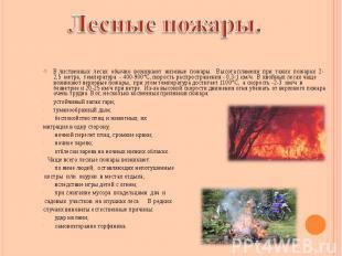 В лиственных лесах обычно возникают низовые пожары. Высота пламени при таких пож