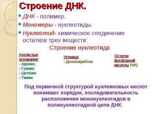ДНК - полимер. ДНК - полимер. Мономеры - нуклеотиды. Нуклеотид- химическое соеди