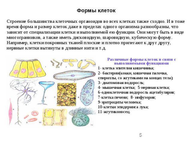 Формы клеток