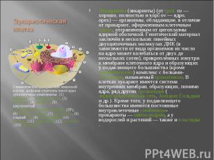 Схематическое изображение животной клетки, цифрами отмечены некоторые субклеточн