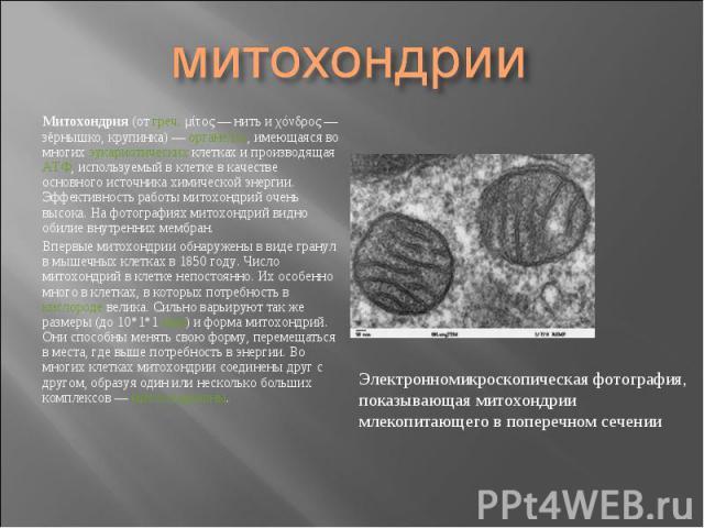 Митохондрия (от греч. μίτος— нить и χόνδρος— зёрнышко, крупинка)— органелла, имеющаяся во многих эукариотических клетках и производящая АТФ, используемый в клетке в качестве основного источника химической энергии. Эффективность раб…