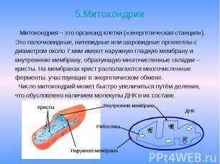 5.Митохондрии Митохондрия – это органоид клетки («энергетическая станция»). Это
