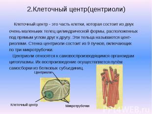 2.Клеточный центр(центриоли) Клеточный центр - это часть клетки, которая состоит