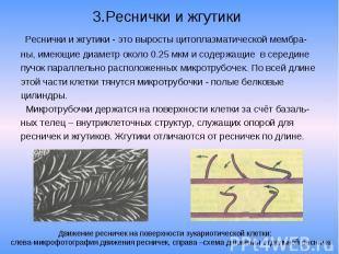3.Реснички и жгутики Реснички и жгутики - это выросты цитоплазматической мембра-