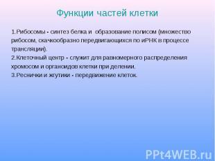 Функции частей клетки 1.Рибосомы - синтез белка и образование полисом (множество