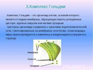 3.Комплекс Гольджи Комплекс Гольджи – это органоид клетки, основой которого явля