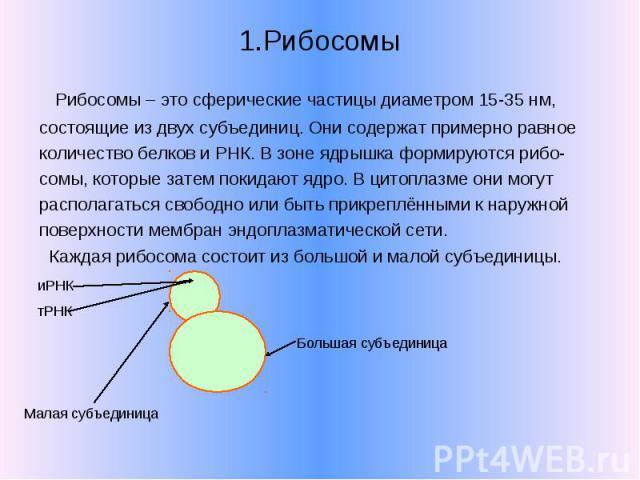 1.Рибосомы Рибосомы – это сферические частицы диаметром 15-35 нм, состоящие из двух субъединиц. Они содержат примерно равное количество белков и РНК. В зоне ядрышка формируются рибо- сомы, которые затем покидают ядро. В цитоплазме они могут располаг…