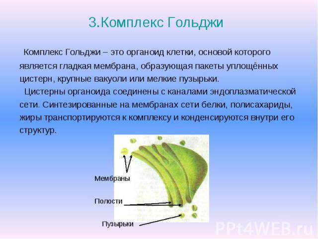 3.Комплекс Гольджи Комплекс Гольджи – это органоид клетки, основой которого является гладкая мембрана, образующая пакеты уплощённых цистерн, крупные вакуоли или мелкие пузырьки. Цистерны органоида соединены с каналами эндоплазматической сети. Синтез…