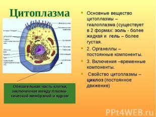 Основные вещество цитоплазмы – гиалоплазма (существует в 2 формах: золь - более