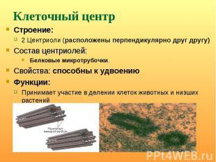 Строение: Строение: 2 Центриоли (расположены перпендикулярно друг другу) Состав