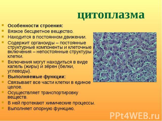 Особенности строения: Особенности строения: Вязкое бесцветное вещество. Находится в постоянном движении. Содержит органоиды– постоянные структурные компоненты и клеточные включения– непостоянные структуры клетки. Включения могут находить…
