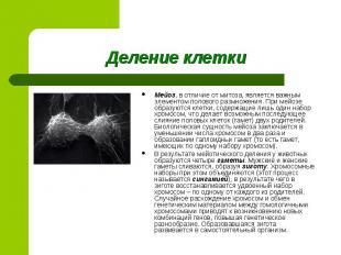 Мейоз, в отличие от митоза, является важным элементом полового размножения. При