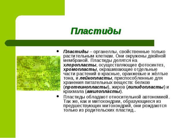 Пластиды – органеллы, свойственные только растительным клеткам. Они окружены двойной мембраной. Пластиды делятся на хлоропласты, осуществляющие фотосинтез, хромопласты, окрашивающие отдельные части растений в красные, оранжевые и жёлтые тона, и лейк…