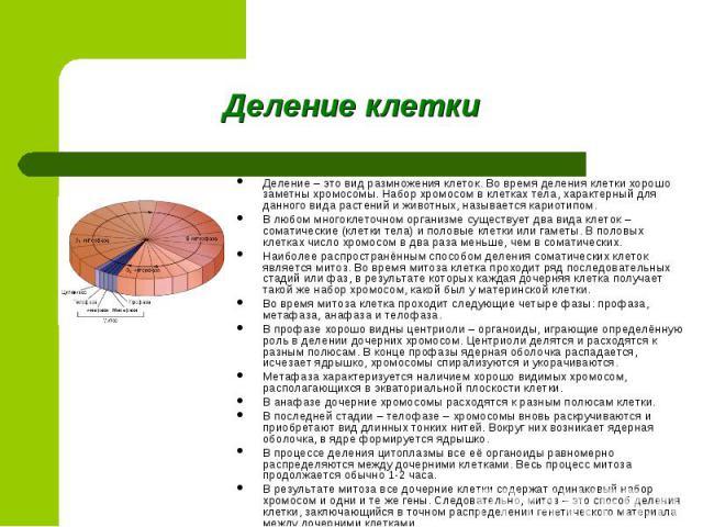 Деление – это вид размножения клеток. Во время деления клетки хорошо заметны хромосомы. Набор хромосом в клетках тела, характерный для данного вида растений и животных, называется кариотипом. В любом многоклеточном организме существует два вида клет…