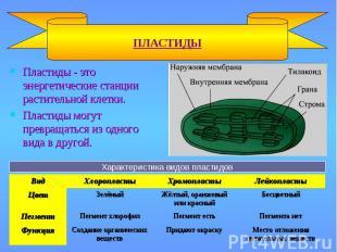 Пластиды - это энергетические станции растительной клетки. Пластиды - это энерге