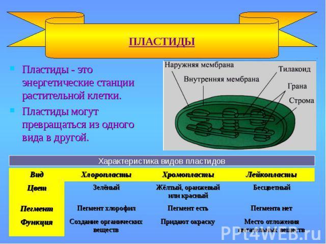 Пластиды - это энергетические станции растительной клетки. Пластиды - это энергетические станции растительной клетки. Пластиды могут превращаться из одного вида в другой.
