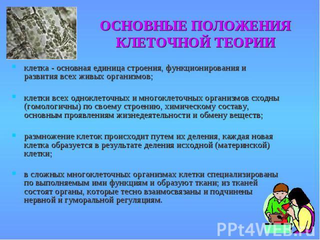 клетка - основная единица строения, функционирования и развития всех живых организмов; клетка - основная единица строения, функционирования и развития всех живых организмов; клетки всех одноклеточных и многоклеточных организмов сходны (гомологичны) …