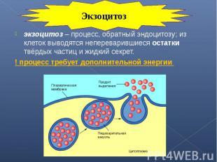 экзоцитоз – процесс, обратный эндоцитозу; из клеток выводятся непереварившиеся о