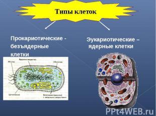 Прокариотические - Прокариотические - безъядерные клетки