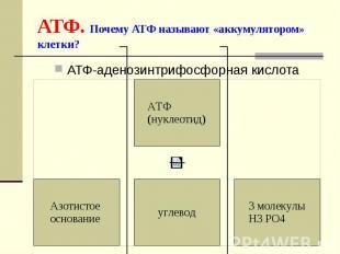 АТФ. Почему АТФ называют «аккумулятором» клетки? АТФ-аденозинтрифосфорная кислот