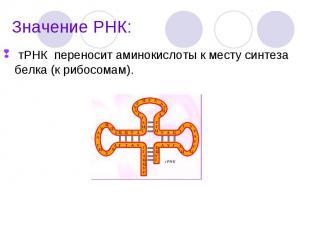 тРНК переносит аминокислоты к месту синтеза белка (к рибосомам). тРНК переносит