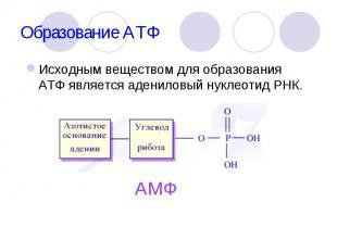 Исходным веществом для образования АТФ является адениловый нуклеотид РНК. Исходн