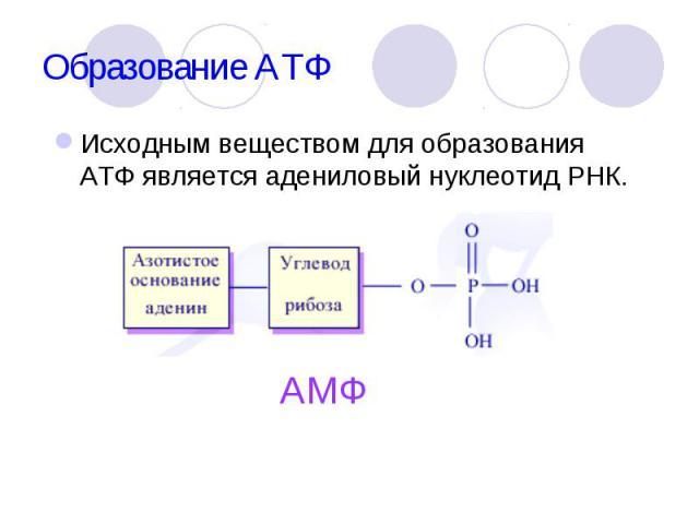 Исходным веществом для образования АТФ является адениловый нуклеотид РНК. Исходным веществом для образования АТФ является адениловый нуклеотид РНК.
