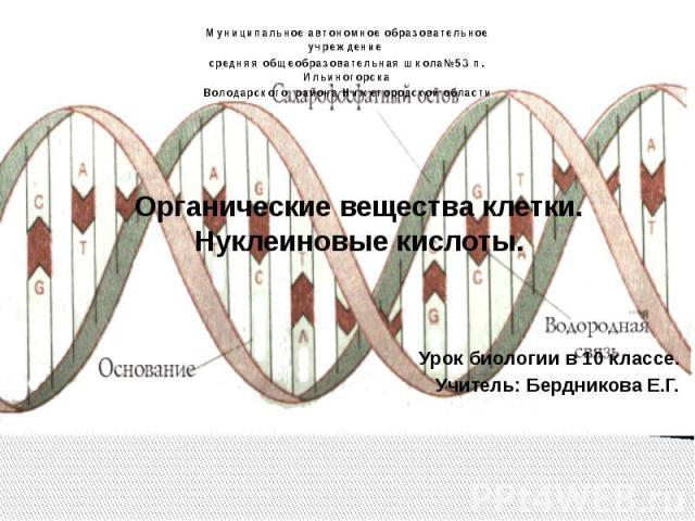 Органические вещества клетки. Нуклеиновые кислоты. Урок биологии в 10 классе. Учитель: Бердникова Е.Г.
