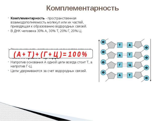 Комплементарность Комплементарность - пространственная взаимодополняемость молекул или их частей, приводящая к образованию водородных связей. В ДНК человека 30% А, 30% Т, 20% Г, 20% Ц. Закономерность соотношения количества аденина и тимина (А-Т) и г…
