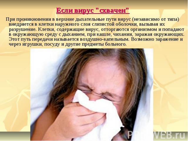 """Если вирус """"схвачен"""" При проникновении в верхние дыхательные пути вирус (независимо от типа) внедряется в клетки наружного слоя слизистой оболочки, вызывая их разрушение. Клетки, содержащие вирус, отторгаются организмом и попадают в окружа…"""