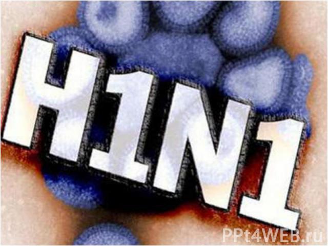 Симптомы свиного гриппа учеловека аналогичны признакам обычного гриппа: Симптомы свиного гриппа учеловека аналогичны признакам обычного гриппа: резко подскакивает до39С ивыше температура озноб ломит суставы имышцы болит…