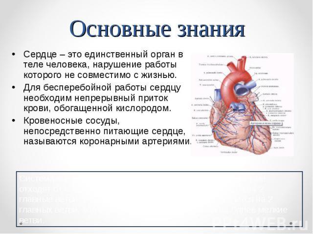Сердце – это единственный орган в теле человека, нарушение работы которого не совместимо с жизнью. Для бесперебойной работы сердцу необходим непрерывный приток крови, обогащенной кислородом. Кровеносные сосуды, непосредственно питающие сердце, назыв…